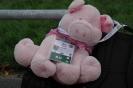 Schwein vom Rhein